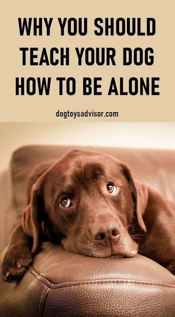 How To Train A Dog To Stay Home Alone While It Would Be Great To