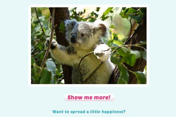 Já conhece o gerador de felicidade? Anima seu dia com imagens fofas, uma por vez http://www.bluebus.com.br/ja-conhece-gerador-felicidade-anima-dia-imagens-fofas/
