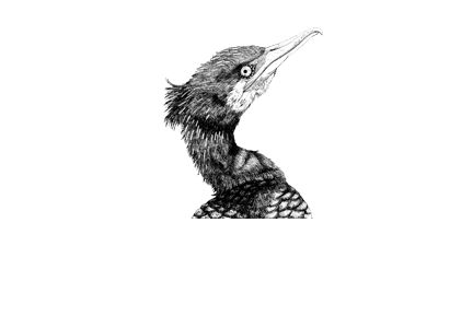 Kormoran. cormorant. illustration. Zeichnung. schwarz weiß. black white. all rights reserved by von ERIKA. www.von-ERIKA.de