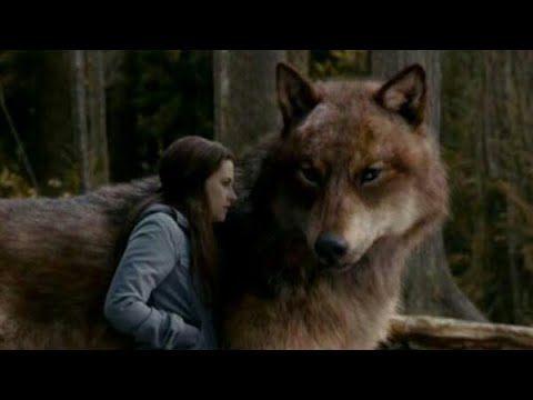 Film Completo In Italiano Youtube Twilight Twilight Series The Twilight Saga Eclipse