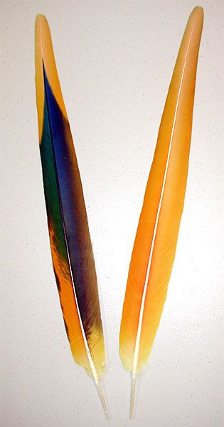 Camelot Macaw Yellow Secondary Tail Feathers