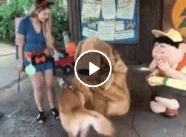 Pensa na alegria que esse cão ficou, ao encontrar um novo amigo!