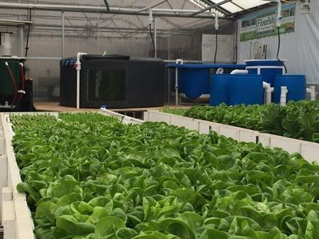 Flourish Farm - Colorado Aquaponics