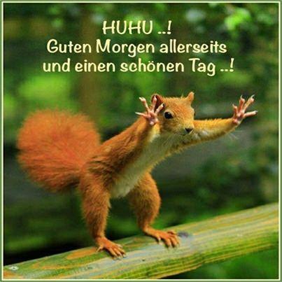 guten morgen - http://guten-morgen-bilder.de/bilder/guten-morgen-298/
