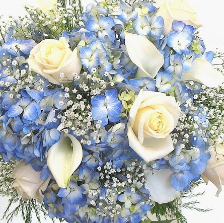A great combination of blue and white wedding flowers consisting of blue Hydrangea, white Roses and white mini-Calla Lilies - all of which are available year-round from GrowersBox.com.