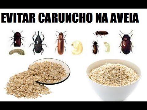 Como Evitar Bicho E Caruncho Na Aveia Youtube Com Imagens
