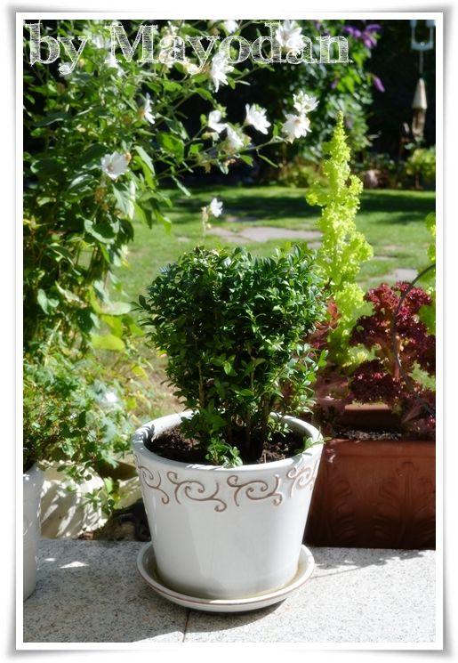 Topfpflanzen Fur Den Sommer Garten Garden Gardening Sommer Topfpflanzen Sommerpflanzen Gartencenter Und Herbstpflanzen