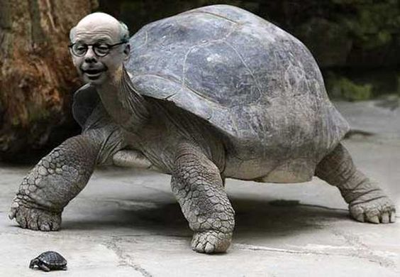 Wallace Shawn as a Tortoise