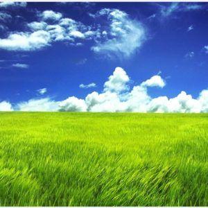Grass Green Field And Blue Sky Wallpaper Grass Green Field And Blue Sky Wallpaper 1080p Grass Green Field Green Scenery Blue Sky Wallpaper Nature Wallpaper