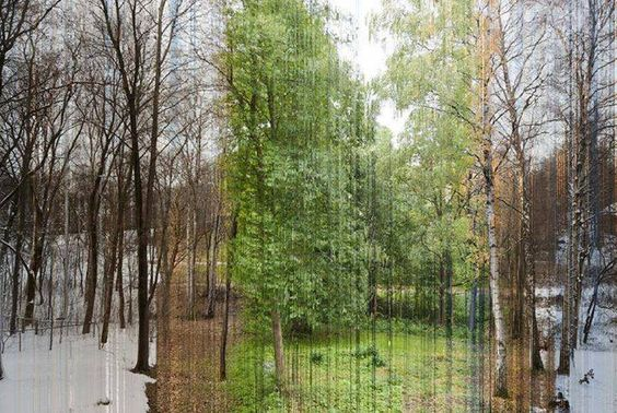 365 Slices of The Year   Each slice of this photo was taken one day of the year to create this multi-seasonal image.