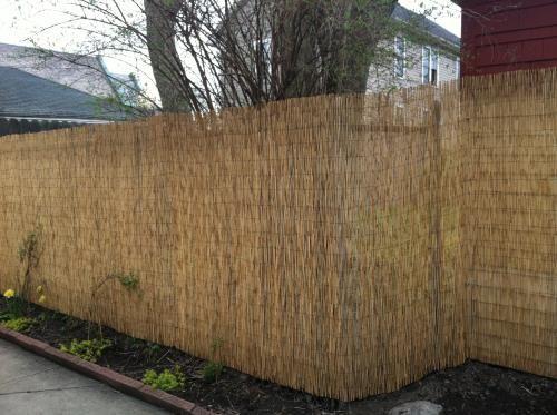 ... short term fix for backyard. answer to covering up an eyesore neighbor  yard. A staple gun + zip