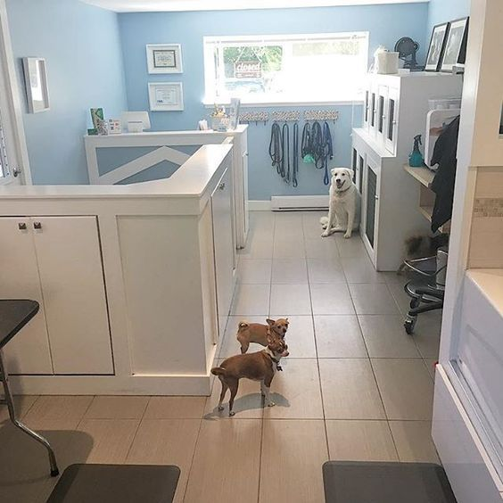 How Much Is Dog Grooming Philippines Featured Products Arfordable Pet Grooming Prices What Each Type Dog Grooming Dog Grooming Salons Emotional Support Dog