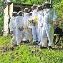 Ibias cuida de su miel