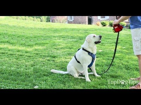 How To Teach Your Dog To Walk On A Leash Youtube Dogs Your