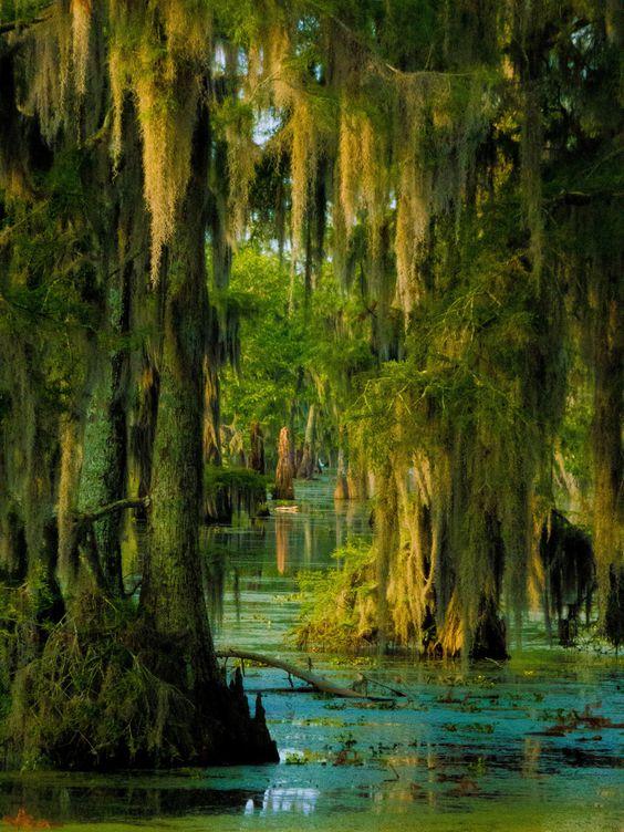 Kimo: Der Dschungel im Sumpf - Cypress Island Preserve, Louisiana, USA
