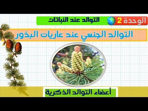 التوالد الجنسي عند النباتات الزهرية عاريات البذور أعضاء التوالد الذكرية 1 Youtube Enjoyment