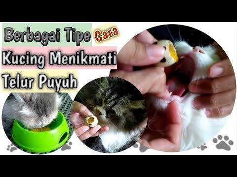 Burung Puyuh Viral Hd - Malaysia News4