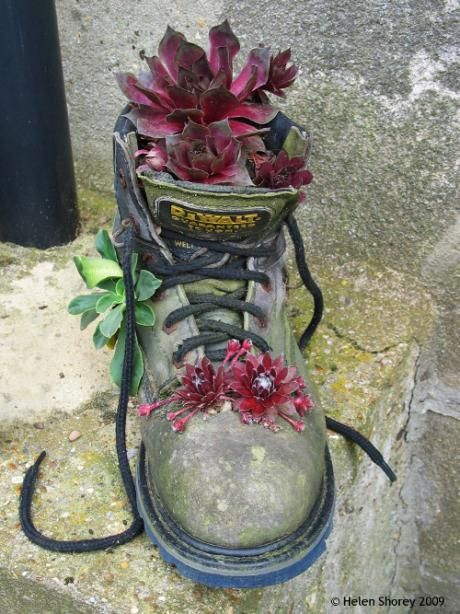 An old, battered work boot makes a good home for houseleeks – especially if you poke a few extra holes in strategic places to add more than one variety for colour.