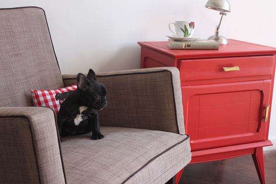 so adorable: Daily Frenchie, French Bulldogs, Chair Pets, Fabulous Frenchies, Favourite Pets