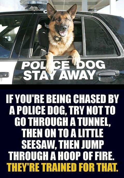 If you're being chased by a police dog