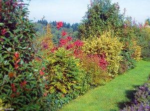 Cr Er Une Haie Dans Son Jardin Jardin Pinterest D Co