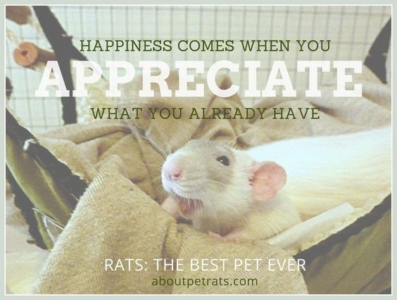 Happiness comes when you appreciate what you already have