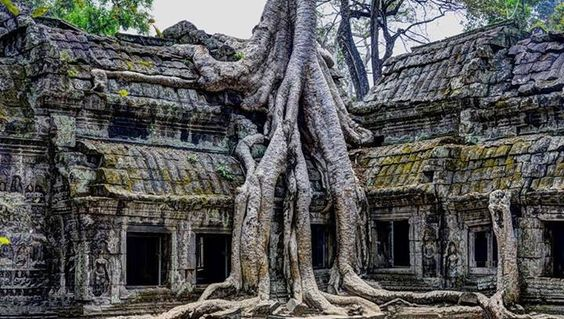 Temple of ta prohm Angkor in Cambodia
