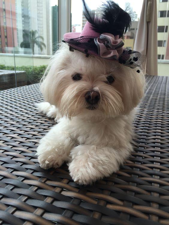 Wilma, quase pronta para passear!