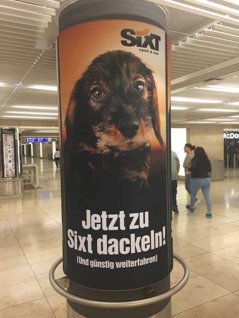 """""""Jetzt zu Sixt dackeln!"""" (Sujet 1)  Drei Sujets waren an je einer Plakatwand am Frankfurter Flughafen angebracht. Werbung von der Autovermietung Sixt ist einfach immer ein Hingucker! #poster #plakat #hund #dackel #werbung"""