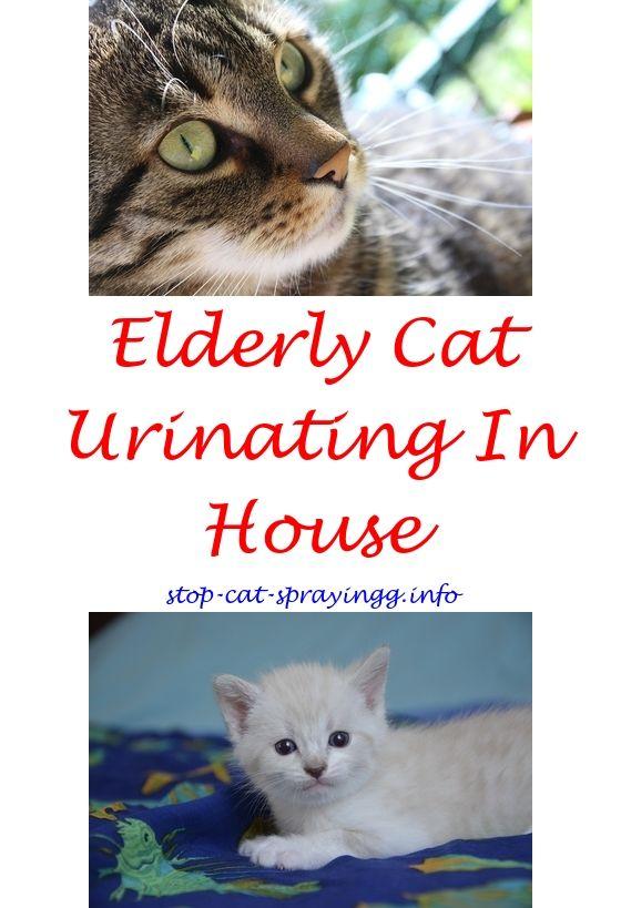 Cat Spray Smell Dog Urine Male Cat Spraying Cat Spray Smell Cat Spray