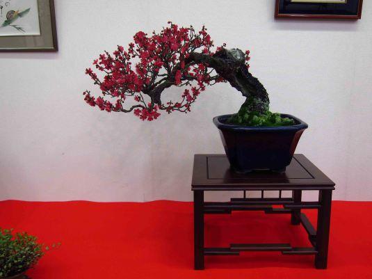 red flower Japanese plum (Ume)