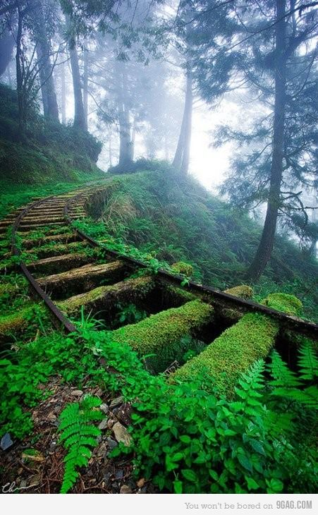 Railroad on the forest...