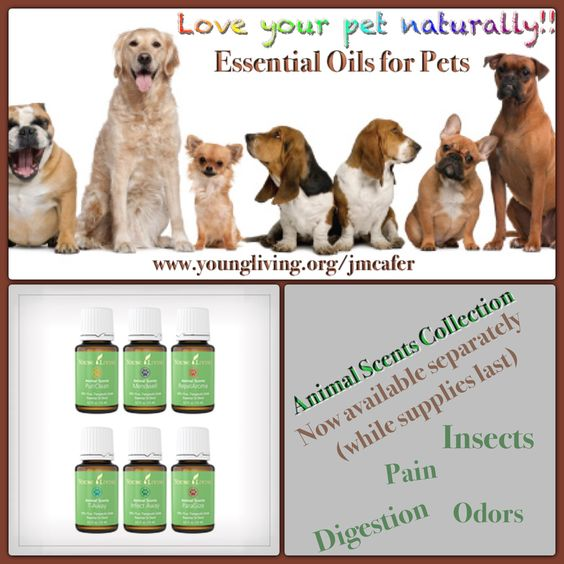 Yes Essential Oils are for pets too!! Love your pets naturally! www.youngliving.org/jmcafer #pets #dogs #animals #insects #digestion #odors #pain #youngliving #essentialoils #natural #naturopath #holistic #health #wellness #lavenderladies #triharmonyoilers #lavender