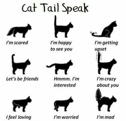 These are accurate and differ from dog tail speak. Cat communication is usually subtle (unless theyre ripping off your face or running up your leg - lol).