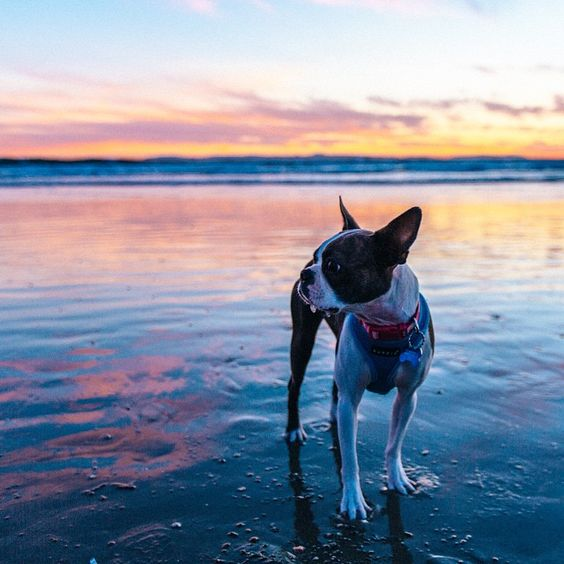 """""""The year is coming to an end! The human has taken me to many beaches and witnessed sunsets from all over. This one stands out. If only there were more…"""""""