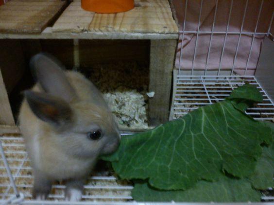 Lana, minha coelha, e sua grande fome!