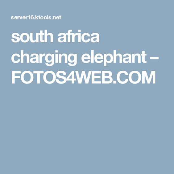 south africa charging elephant – FOTOS4WEB.COM