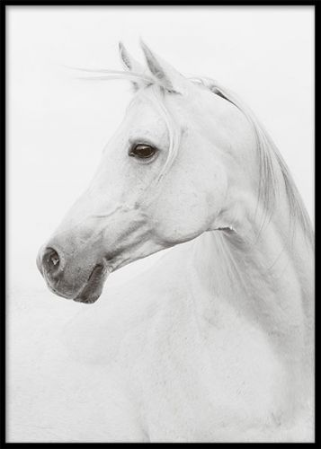 Poster med fotokonst. Tavla med porträtt av vacker vit häst. Affisch i storleken 50x70cm