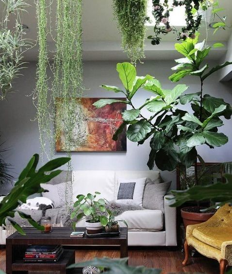 12 Interior Design Accounts On Instagram You Should Ve Followed Yesterday Living Room Plants Hanging Plants Indoor Garden Garden living room decorating ideas