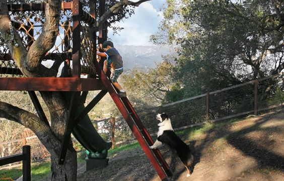 Barbara Butler tree house. Dog not included.