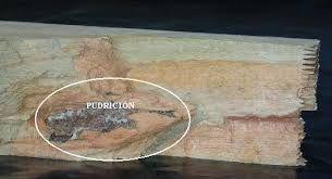 Resultado de imagen de PUDRICION DE LA MADERA