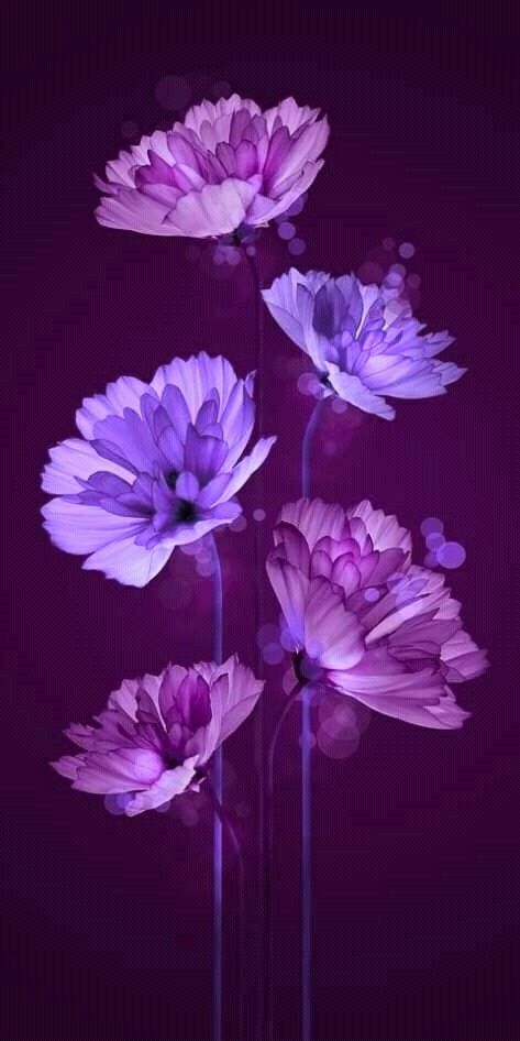 Super Flowers Background Tumblr Purple Ideas In 2020 Flower Background Wallpaper Purple Wallpaper Flower Backgrounds