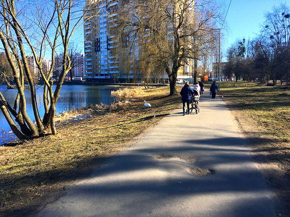 На Летнем озере прогуливаются и люди, и лебеди. Фото: Vladimir Shveda