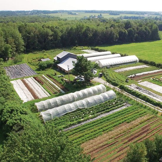 Market Gardening: How to Make a Living on 1.5 Acres - Organic Gardening - MOTHER EARTH NEWS