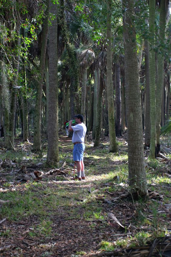 Hiker pauses along Cathedral of Palms Trail in Wakulla County, Florida
