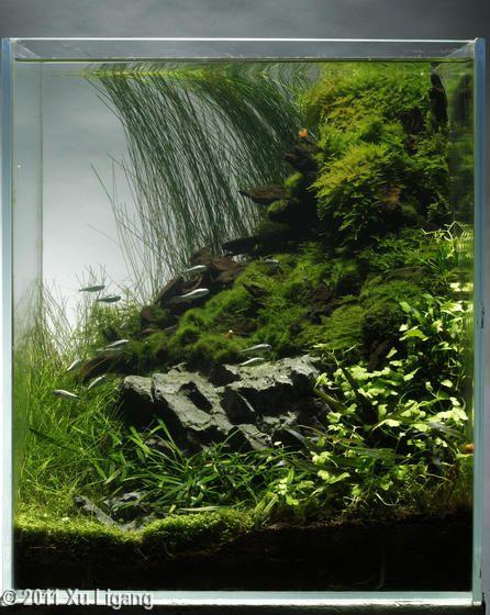 Beautiful small vertical tank terrarium fish tank or for Vertical fish tank