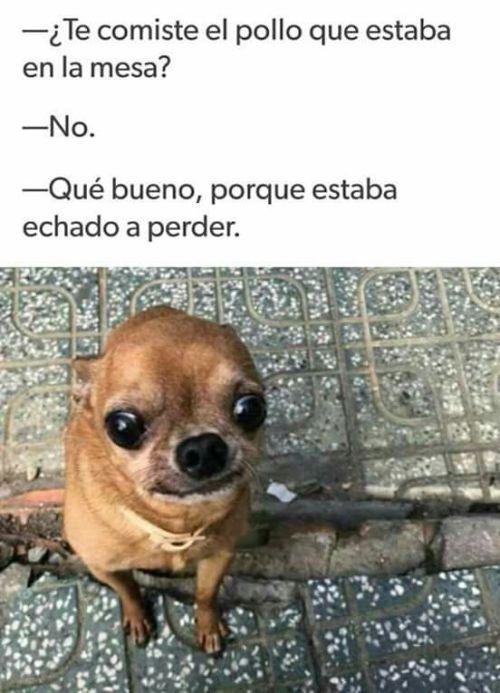 Perros Graciosos Http Enviarpostales Es Perros Graciosos 334 Perros Animales Animal Memes Funny Spanish Memes Memes