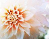 "Floral Photography Pink Dahlia Flower Fine Art Print Wall Art Home Decor 8x10 ""Dahlia"""