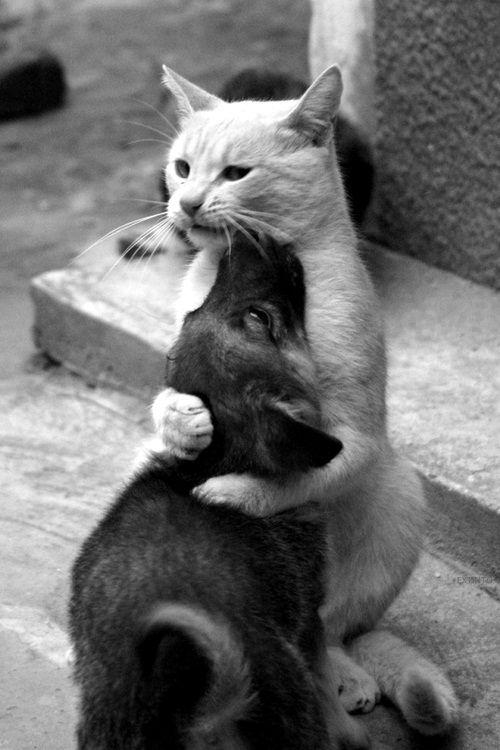 Amigos  Entre eles não há rivalidades