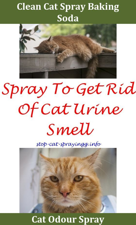 How To Get Rid Of Cat Urine Smell From Apartment Bing Images House Cleaning Tips Household Cleaning Tips Cleaning Hacks